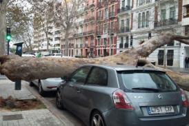 El fuerte viento tumba un árbol sobre un coche en Valencia y provoca olas de más de 4 metros