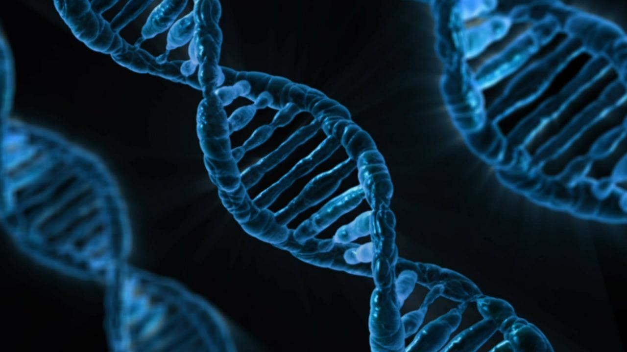 Hallan un gen capaz de evitar malformaciones a causa de la diabetes materna