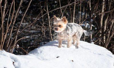 ¿Cuánto frío puede soportar mi perro?