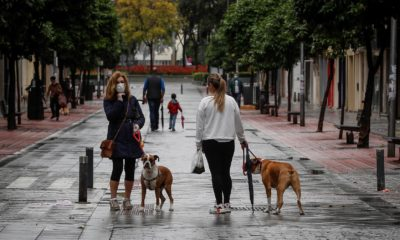 coronavirus perros humanos